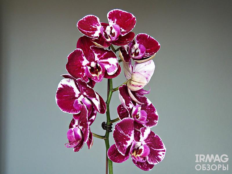 Грунт субстрат Orchiata Power для взрослых орхидей (1 л.)