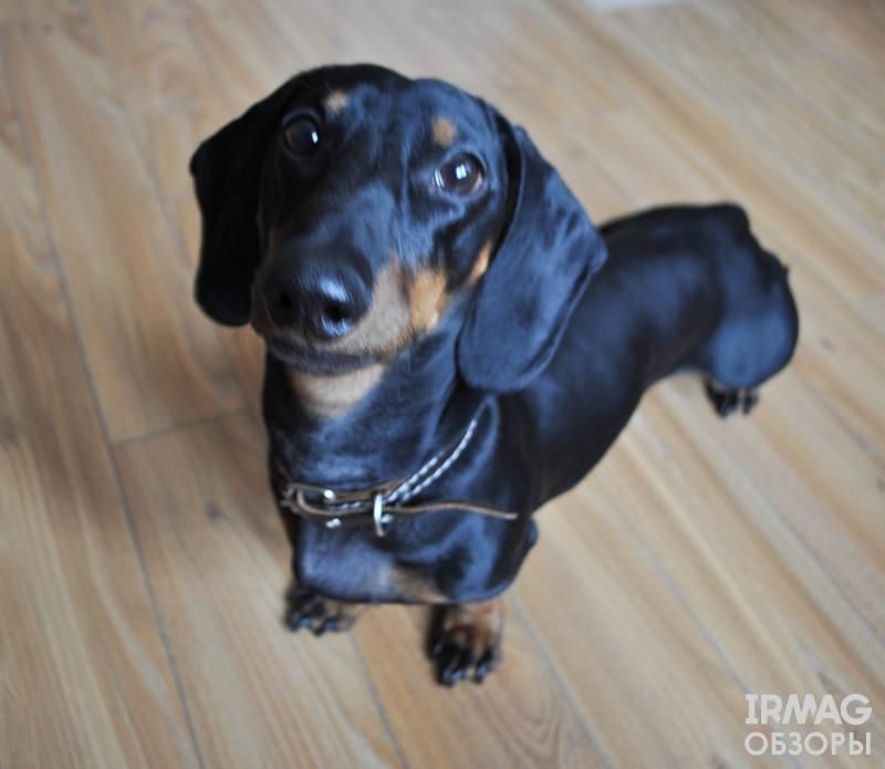 Лакомство для собак Titbit Шашлычок говяжий (2 шт.)