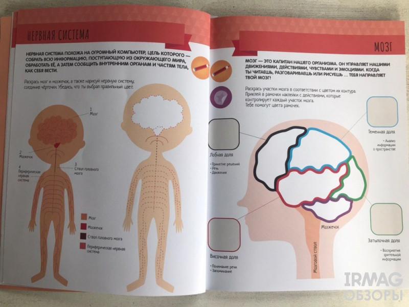 Книга Мозаика-Синтез Метод Монтесcори Антивити с наклейками Тело человека 4+